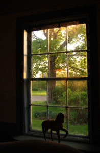 The Historic Butler House window - Fonda NY
